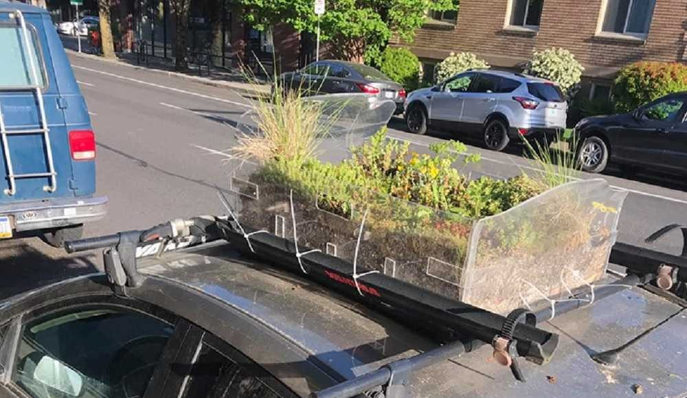 garden on top of a Prius